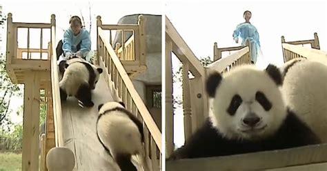 job   world bored panda