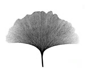 3d Home Design App Ipad x ray of ginkgo leaf photograph by bert myers