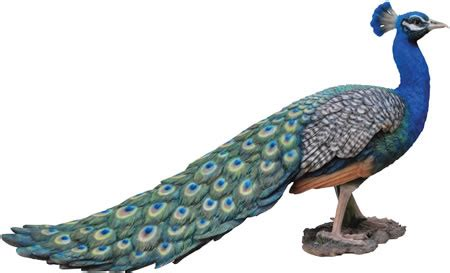 realistic peacock statue  natures gallery