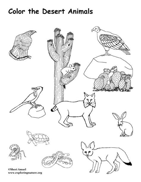 desert animals coloring page exploring nature