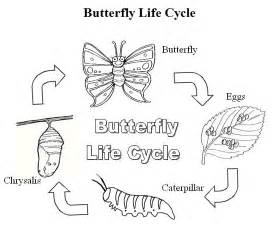 caterpillar cylcle colouring pages butterfly cycle coloring pages animals coloring
