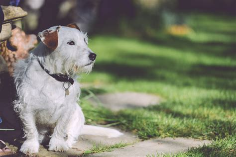 outside dogs free stock photo of garden outside