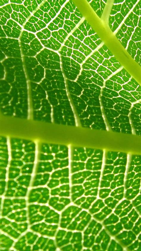 wallpaper iphone leaf plant leaf iphone 6 wallpapers hd iphone 6 wallpaper