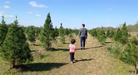 choose and cut your own christmas tree farms in san