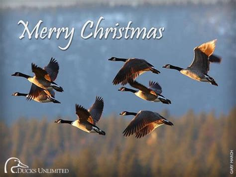 Ducks Unlimited Cards - ducks unlimited shares the spirit the spokesman