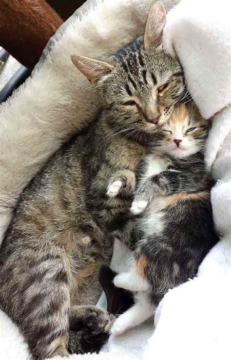stray cat and kittens in backyard stray cat mama brings her single kitten to cat loving man
