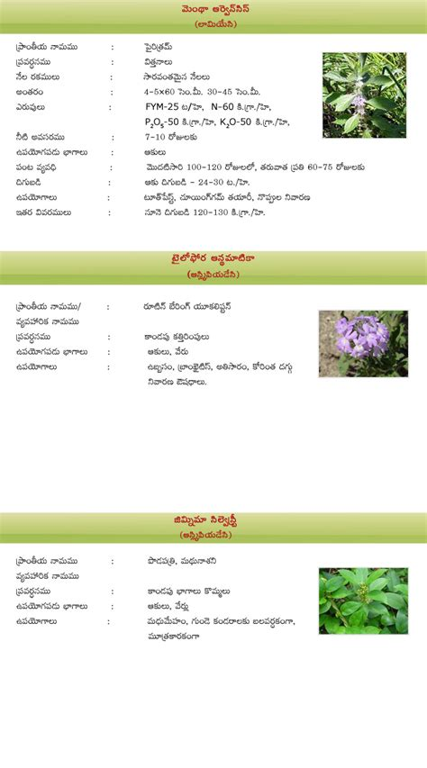 Medicinal Plant Essay by Essay On Medicinal Plants Medicinal Plants Neem Classification Essay Mainstreaming Conservation