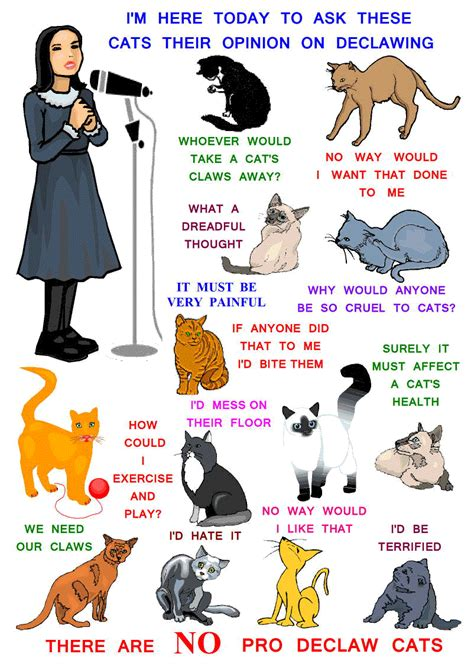 pros and cons of cats there are no pro declaw cats