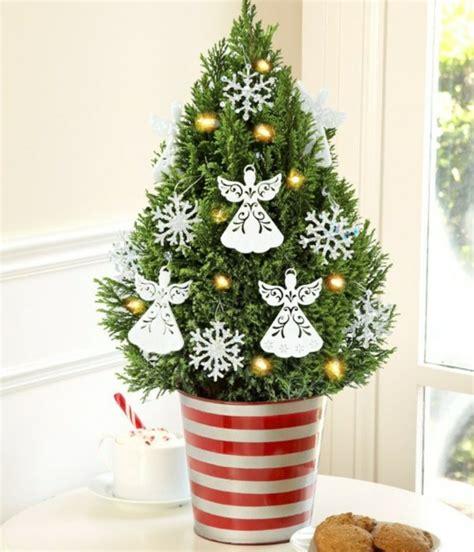 weihnachtsbaum im topf kaufen und bilderrahmen ideen