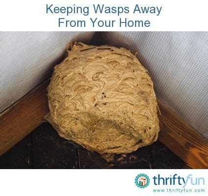 how to keep wasps away from house keeping wasps away from your home brown paper bags bags