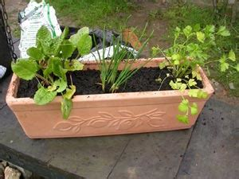 Plantation Herbes Aromatiques Jardiniere by Basilic Persil Tout