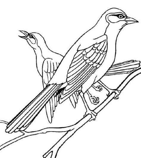 preschool coloring pages birds preschool bird coloring pages 5 171 preschool and homeschool