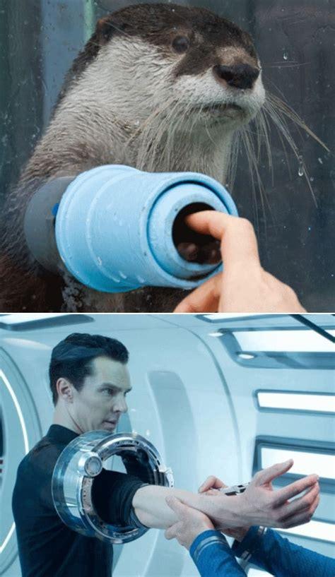 Benedict Cumberbatch Otter Meme - 66 best images about genre quot rabbits in waistcoats quot on