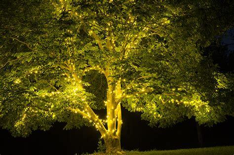 Nice White Christmas Tree Lights #8: String-light-wrapped-trees-5365.jpg