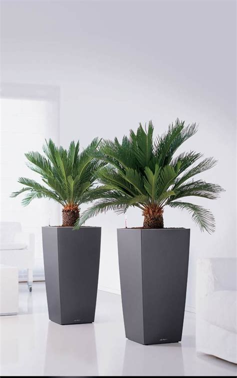 planters planters  indoor plant containers  sale