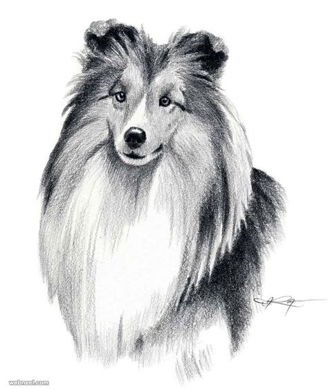 beautiful dog drawings  art works  top artists
