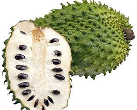 graviola tree fruit where to buy buy guanabana soursop plants moringa trees for sale