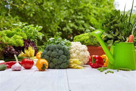 vegetable gardening  beginners  complete guide