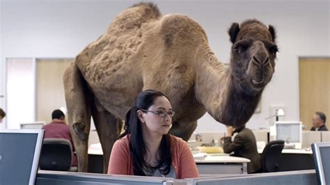 geico camel commercial hump day so i can see the camaltoe of one of my co workers ign boards