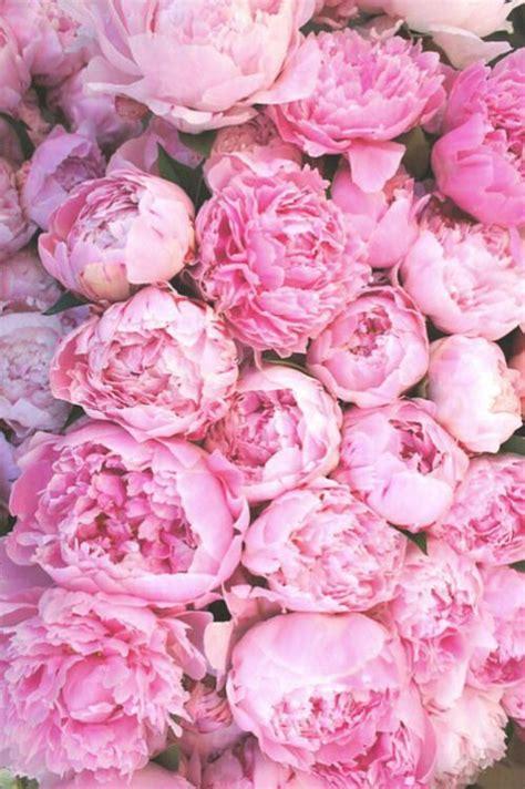pink peonies nursery best 25 peony background ideas on pinterest peony