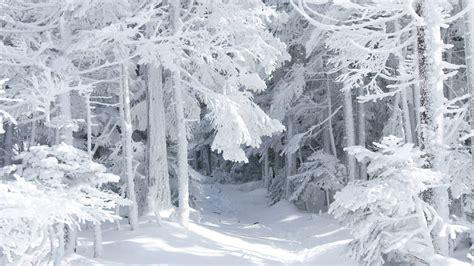 wallpaper desktop winter free free desktop winter wallpaper hd desktop wallpapers 4k hd