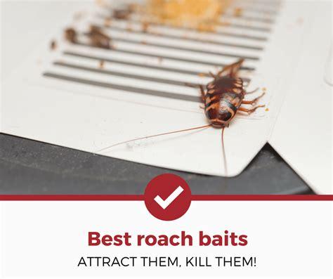 best cockroach best roach bait reviews baits that work in 2018 pest