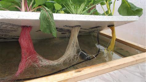 grid hydroponics experiment  kratky method