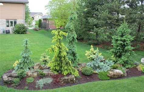 Evergreen Landscaping Ideas Start Of A Conifer Garden On A Berm Garden Quot In Pursuit Of Conifers Quot Pinterest Gardens