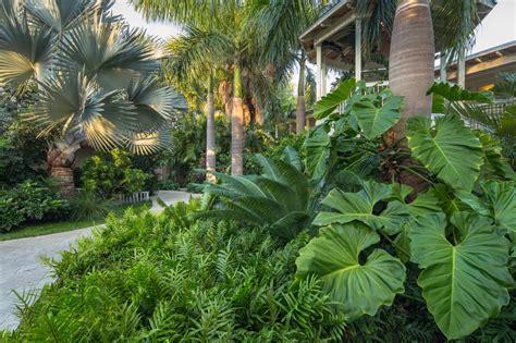 backyard and garden design a tropical garden hgtv