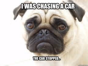Pug Meme - lonely pug meme