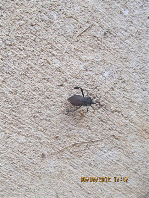 backyard bugs can someone id this beetle bug growing bugs magnolia fruit trees garden trees