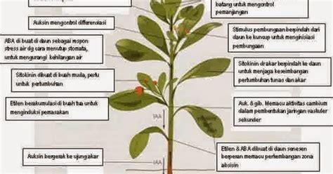 Hormon Zpt Organik hormon tumbuhan atau zpt zat pengatur tumbuh
