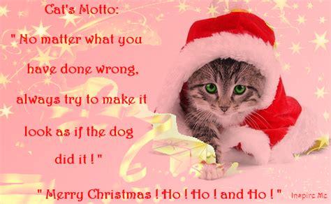 christmas cat quotes quotesgram