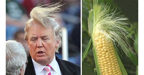 donald trump looks like 20 things that look just like donald trump smosh