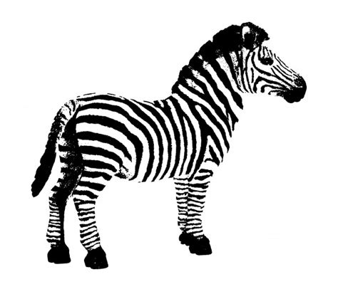 clipart zebra zebra clipart free stock photo public domain pictures