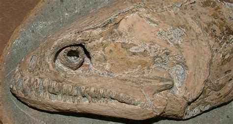 surprise fossils   flash science news  students
