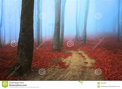 road in forest stock photo image of darkness mist scary road in the forest stock photo image 59010907