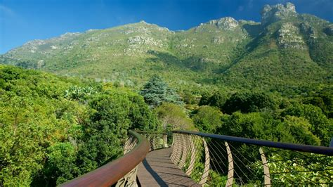 Kirstenbosch National Botanical Gardens Gardens Parks Pictures View Images Of South Africa