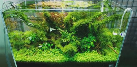 Aquascape Style by Nature Aquariums And Aquascaping Inspiration