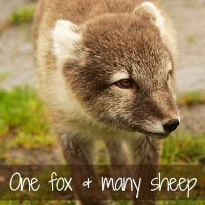 one fox iceland travel guide inspiring photos maps detailed