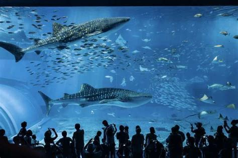 japanese aquarium five of the biggest aquariums in japan triplelights