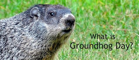groundhog day 2016 annies home 2016 01 31