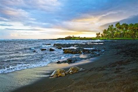 picture photo black sand beach at punaluu big island turtle hut i at punalu u black sand beach vrbo
