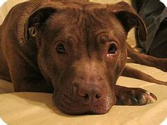 ne states pets in rescue no kill shelters needing adoption fab fur homes on