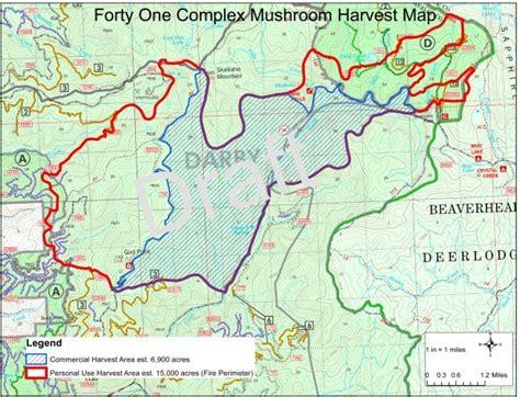 morel map bitterroot national forest prepares for morel harvest state regional missoulian