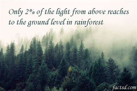 10 Facts About The Forest Floor by Rainforest Facts 100 Facts About The