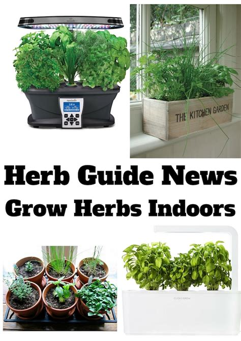 growing herbs inside herb garden for kitchen window