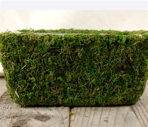 Moss Planter Liners by Moss Pots Preserved 8 5 Quot X 5 25 With Liners