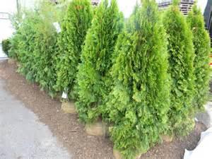 shrubs for fence line veggie garden outdoor fun pinterest
