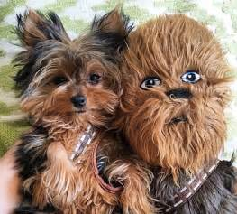 Star Wars Toasters 13 Of The Dorkiest Yorkies The Internet Has Ever Seen